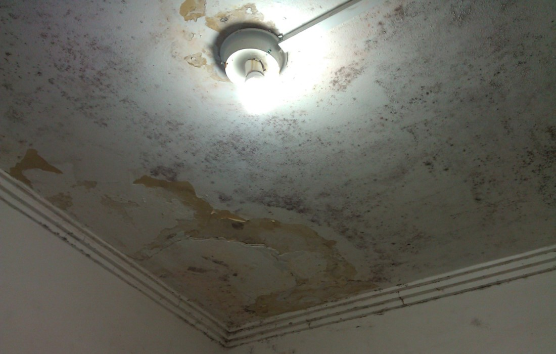Specialising in the repair of walls and ceilings, Holes, Cracks, Flaking/ peeling paint, Water Stains, Dirty walls & ceilings